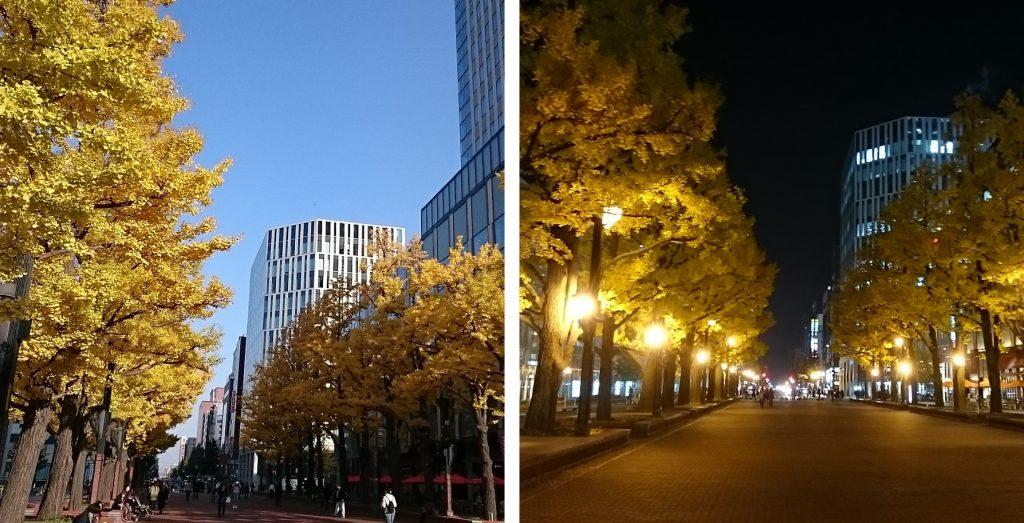 赤れんがテラス前のイチョウは、昼と夜のどちらもキレイな黄葉を楽しめます