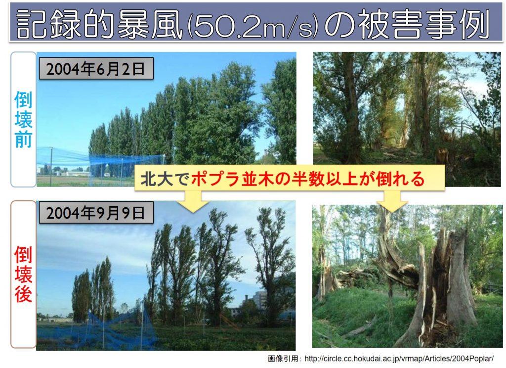札幌の暴風記録でポプラ並木倒れる