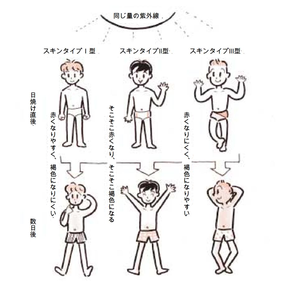 日本人の肌タイプ 紫外線保健指導マニュアルより図引用